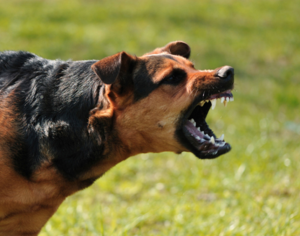 Dog Bite Lawsuit Loans | Dog Bite Settlement Loans